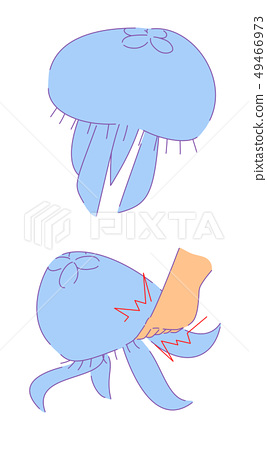 Two types of jellyfish 49466973
