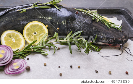 Cooking catfish with spices and rosemary 49472859