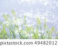 Rape blossoms 49482012
