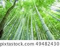 Bamboo grove 49482430
