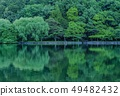 Fresh green reflection 49482432