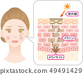Structure of blot Cross section of woman's face and skin 49491429