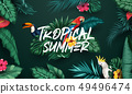 Birds collection and tropical plants background 49496474