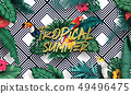 Birds collection and tropical plants background 49496475