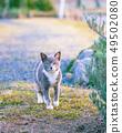 산책중인 고양이 49502080