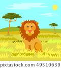 Lion Sitting Calmly on Dry Grass, Wild Nature 49510639