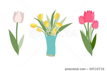 Yellow and Pink Tulips, Different Colors and Types 49510716