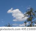春天藍天和白色雲彩 49515009