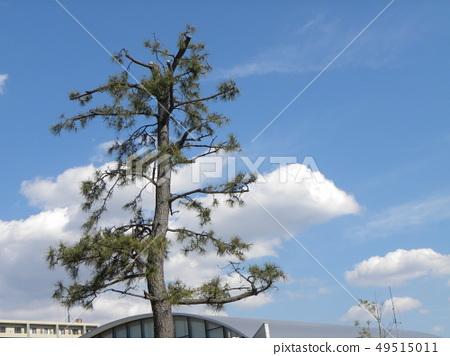春天藍天和白色雲彩 49515011