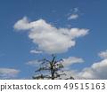 春天藍天和白色雲彩 49515163