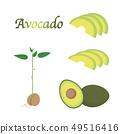 아보카도 열매와 어린 나무의 일러스트 세트 49516416