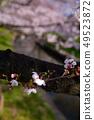 강변의 벚꽃 여덟 분 개화 카와 경관 백선 新河岸川의 벚꽃길 a 49523872