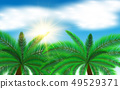 椰子 树木 树 49529371