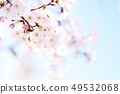 Yoshino cherry tree 49532068