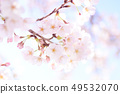 Yoshino cherry tree 49532070