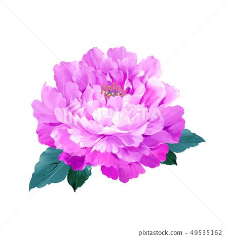 盛開的玫瑰和牡丹花 49535162