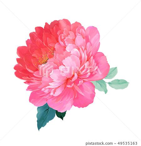 盛開的玫瑰和牡丹花 49535163