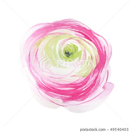 優雅的水彩花朵 49540403