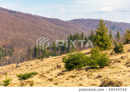 early spring in mountains 49544548