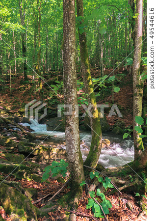 forest stream with rocky shore in summer 49544616