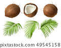 Whole and broken coco nut with green palm leaves 49545158