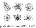 ดอกไม้,โรงงาน,เวกเตอร์ 49551525