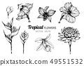 ต้นพู่ระหง,ดอกธรรมรักษา,ดอกไม้ 49551532