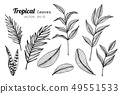 Collection set of Tropical leaves drawing. 49551533