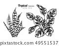 Collection set of Tropical leaves drawing. 49551537