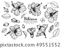 set of hibiscus flower and leaves drawing 49551552