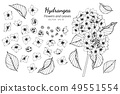 set of hydrangea flower and leaves drawing 49551554