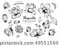 แมกโนเลีย,ดอกไม้,ใบไม้ 49551560