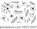 ลั่นทม,ดอกไม้,ใบไม้ 49551567