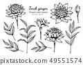 ดอกไม้,ใบไม้,โรงงาน 49551574