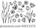 ทิวลิป,ดอกไม้,ใบไม้ 49551575