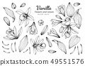 set of vanilla flower and leaves drawing 49551576