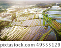 Aerial view of Bali Rice Terraces. The beautiful 49555129