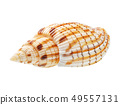 Seashell isolated on white background 49557131