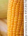 Close up shot Fresh ripe and peeled sweet corn 49558078