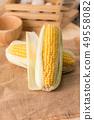 Close up shot Fresh ripe and peeled sweet corn 49558082