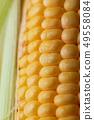 Close up shot Fresh ripe and peeled sweet corn 49558084