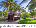 Tropical coconut palm trees at the beach 49565319