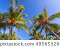 Tropical coconut palm trees over blue sky 49565320