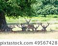 잔디에 농성 휴식 할 수 밖에 지났 영국 리치몬드 파크에서 49567428