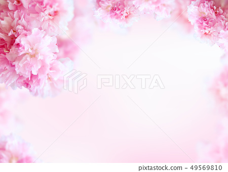 아름다운 봄꽃 배너&프레임, 세일,초대장 배경 49569810