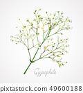 Gypsophila white flower 49600188