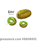 Kiwi fruit drawing. Watercolor kiwi on a white background. Vector illustration 49608405