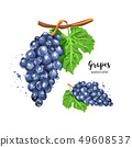 Watercolor bunch of grapes on an isolated white background. Watercolor grapes. Vector illustration 49608537