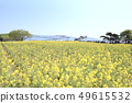 Hitachi beach park rape blossoms nemophila 49615532
