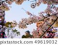 犬山城堡和櫻花 49619032